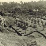 Hoogstamboomgaarden